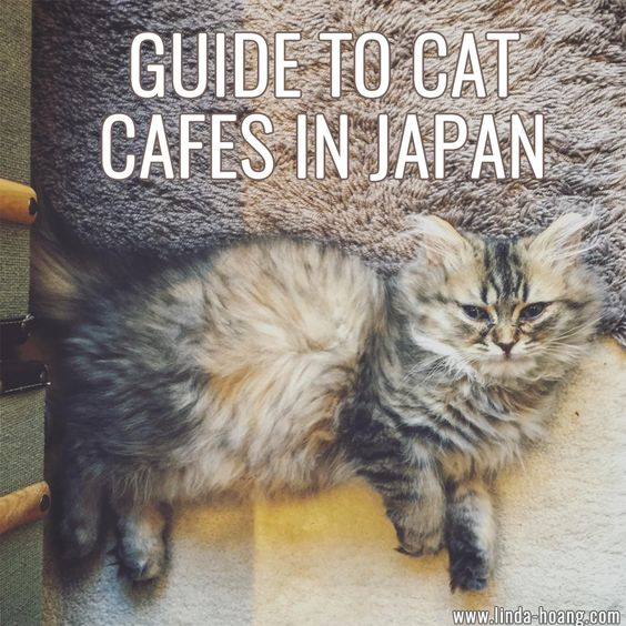 Guide to Cat Cafes in Japan