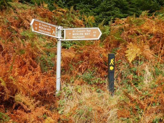 De Wicklow Way wandelen? - Tips, info & de beste aanbiedingen!