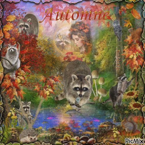 Raccoons in autumn