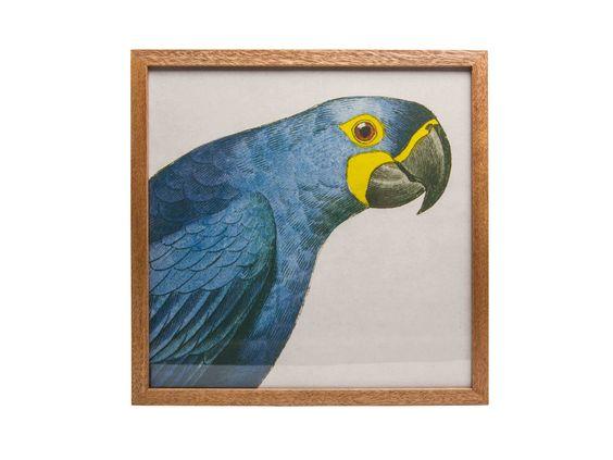 Perroquet Print