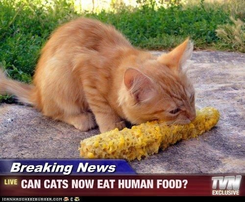 what eats feral cats