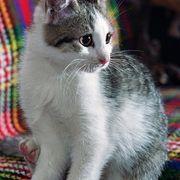 cat urine remove cat urine and cat urine smells on pinterest. Black Bedroom Furniture Sets. Home Design Ideas
