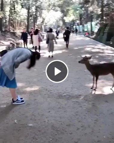 Japonesa cumprimenta seu novo amigo