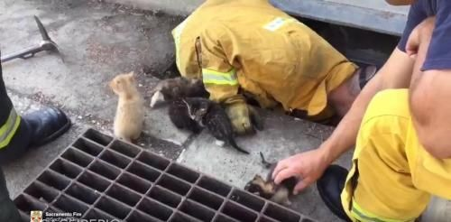 California firefighters rescue kittens from storm drain: Ben Hooper SACRAMENTO, Aug. 9 (UPI) -- A California fire department shared video of…