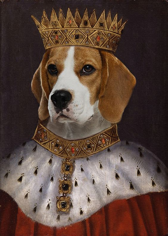 Posh Pets Dog Accessories That Cost More Than Your Life Life Of Trends Beagle Dog Beagle Puppy Beagle Art
