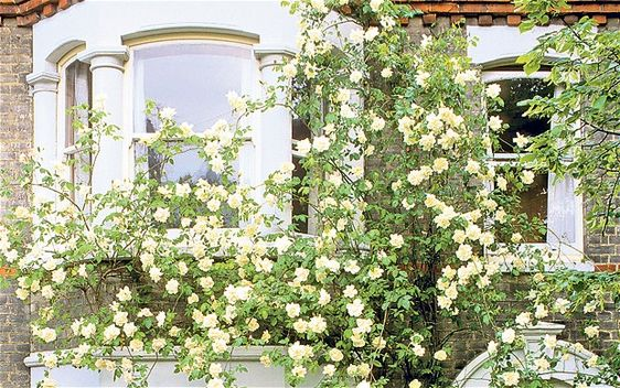 Plants To Grow Up Against Walls Gardening Pinterest