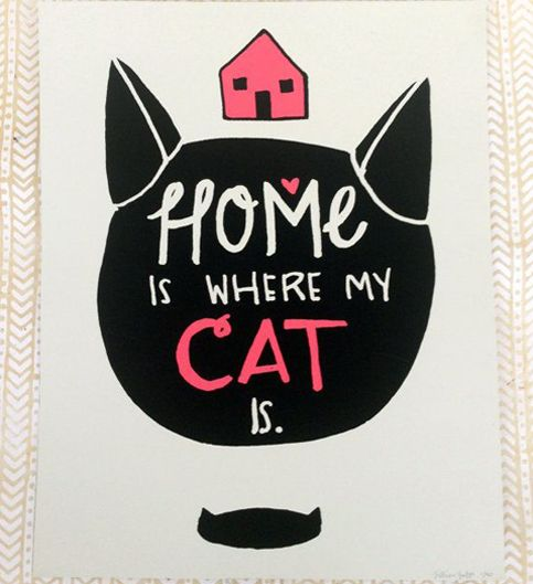Inspiração: Gatos | InspirationPage