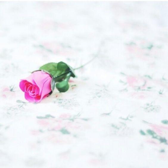 صور ورد و صور زهور من أجمل و أندر الورود من جميع أنحاء العالم مع خلفيات Hd بفبوف My Flower Instagram Posts Wallpaper Keren