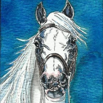 ACEO Andalusian Horse Head Original Watercolor & India by Carpiss