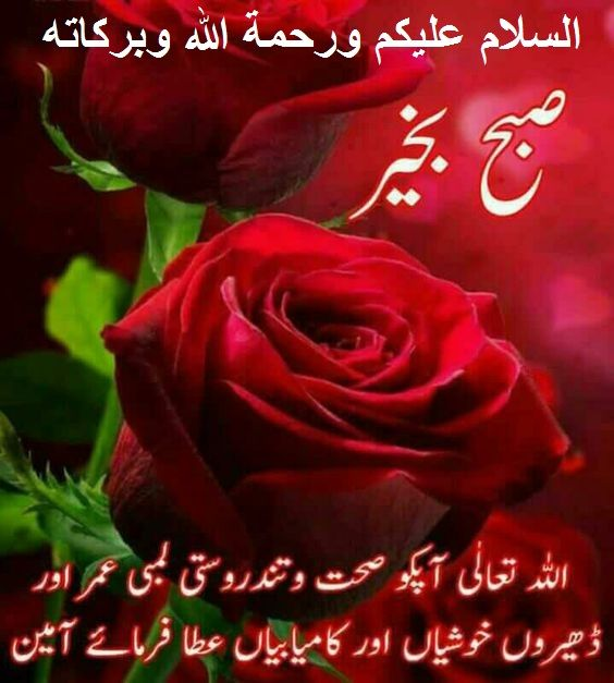 Pin By Shaheen Perwaz On Morning Duas Good Morning Images Flowers Beautiful Morning Messages Good Morning Flowers