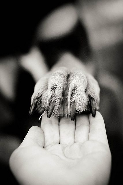 by placing my paw in your hands..I am also placing my life in your hands 4 ever..  may u both have a blessed life together 4 ever..peace b with u