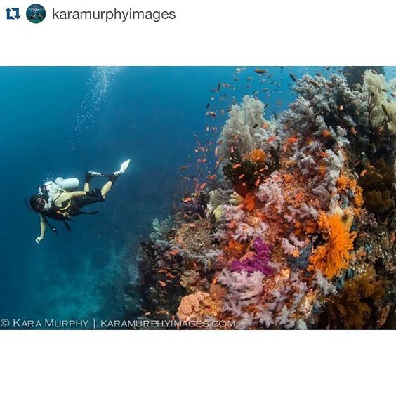 We love Whale Rock and we love this #throwbackthursday from @karamurphyimages. #rajaampat #superyacht #diving #indonesia #travel #duniabaruadventures #luxurytravel #sailingyacht #underthesea  #tbt to Whale Rock in #RajaAmpat. Certainly one of the most beautiful underwater environments I've been fortunate enough to witness.  @duniabaruadventures by duniabaruadventures