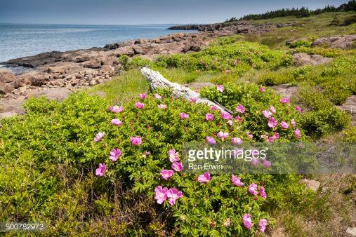 flowering plants of nova scotia - Google Search