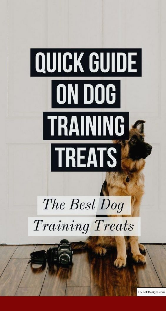 How To Train Your Dog To Attack On Command Video And Pics Of How