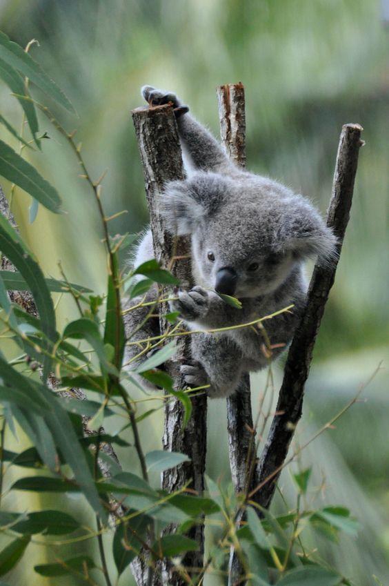 Australia (221 of 308) | Flickr - Photo Sharing!
