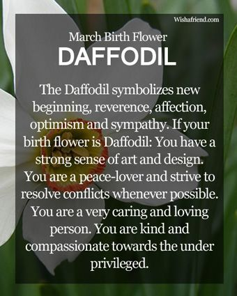 March Birth Flower : Daffodil...no wonder it's my favorite flower!