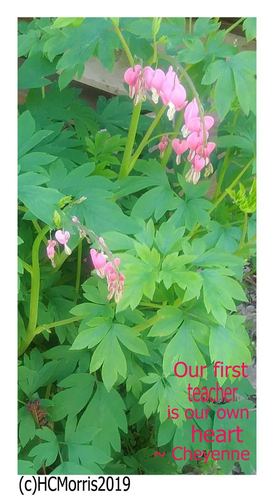 """image of pink bleeding hearts flowers with """"our first teacher is our own heart"""" quote"""