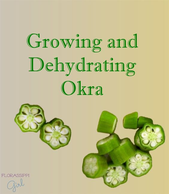 Growing and Dehydrating Okra