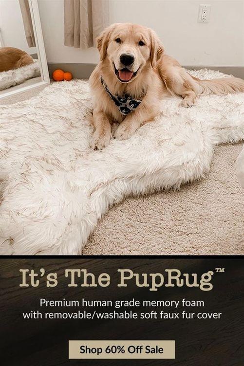 Beyond The Dog Training Kansas City Dog Training Petsmart Dog