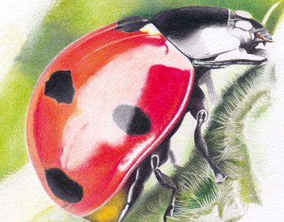"Check out new work on my @Behance portfolio: ""Dans le jardin…"" http://be.net/gallery/33093151/Dans-le-jardin"
