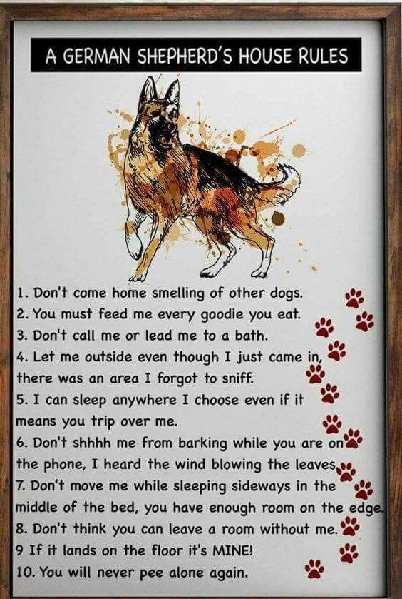 Omg Could This Be Any More True German Shepherd Quotes