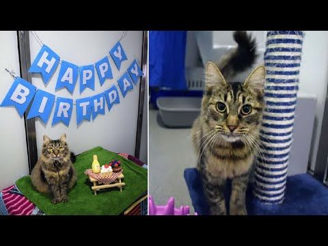 Shelter Threw Cat A Birthday Party To Help Her Get Adopted But