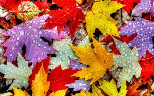 Free Online Autumn Desktop Wallpaper Fall Wallpaper Iphone Wallpaper Wallpaper