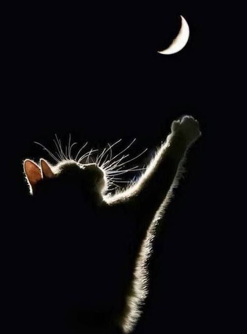 Een kat reikt naar de maan,mooi gezicht-----------------lbxxx.: