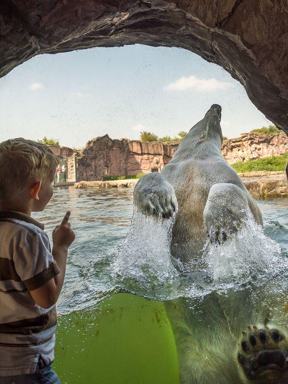 TBall: Anweisungen an den Eisbären