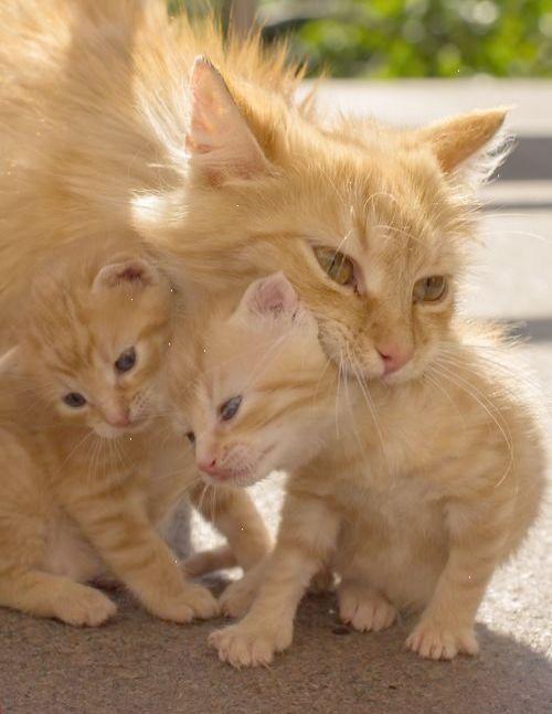 Brilliant Cats And Kittens Magazine Repin Mama Cat Cats