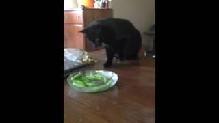 #Cat Vs Bowl Of Chick Peas - #funny