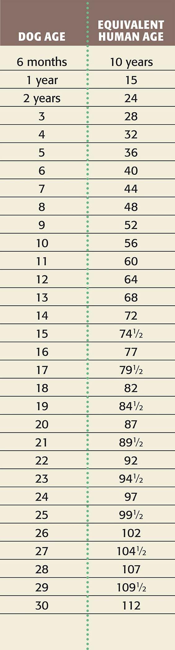 Dog Age Calculator Dog Years to Human Years Pets