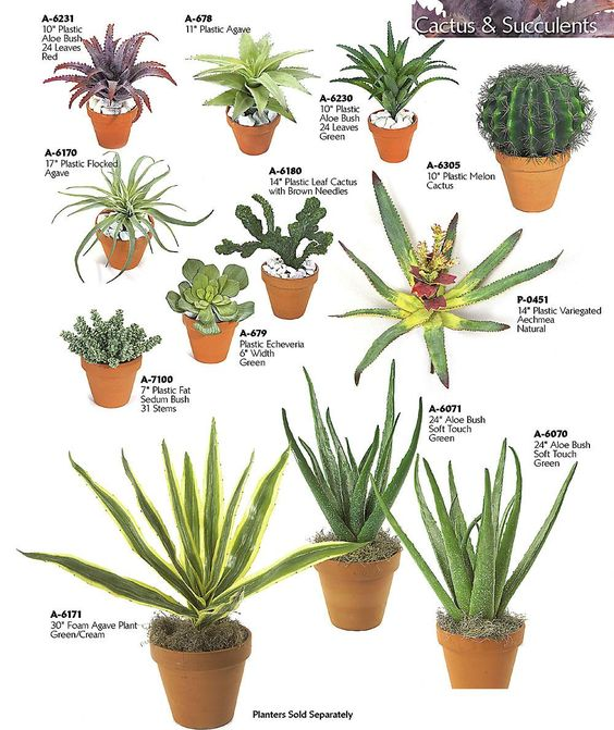 Cacti and succulents cactus and types of succulents on pinterest - Indoor plant types ...