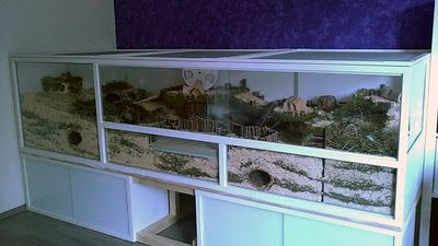 Near-natural hamster enclosure: 2.7 m² dream DIY / DIY dream 29ft square cage