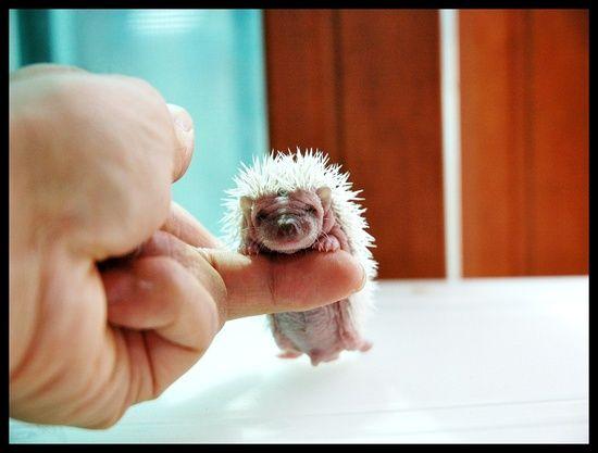 a tiny baby:
