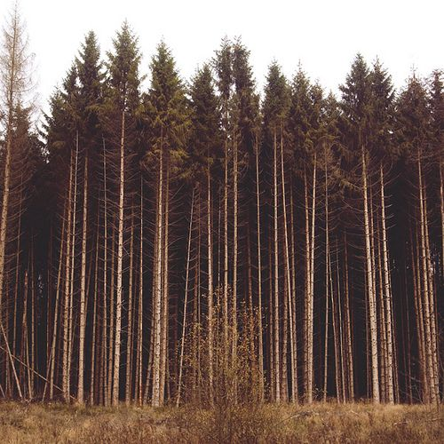 Trees: Favorite Places Spaces, Into The Woods, Tall Trees Inspiration, Trees Woods, Trees Sooo, Brown Trees, Woodsie Stuff