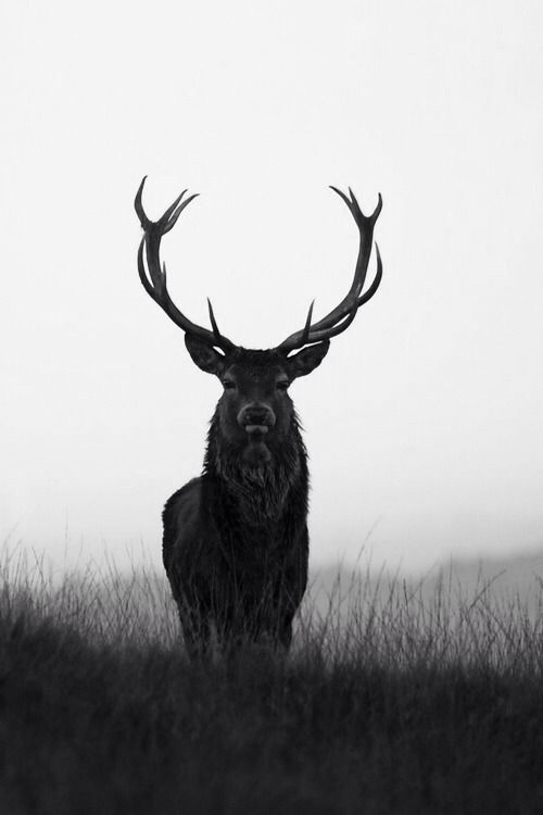 Hert. Het hert is evenals de ree een elegant dier. Als beide dieren voor de vrouwelijke kracht als elegantie staan, kan het hert met zijn grote gewei heel goed betekenen dat je trots kunt zijn op iets wat je hebt bereikt. Met mannelijke kracht zoals daadkracht, maar zonder de nodige bombarie.: