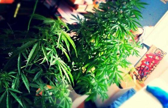 Zese_kdz para #GrowLandiaComunidad - http://growlandia.com/highphotos/media/mis-nenas/