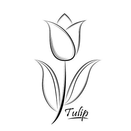 Vector Black Contour Of A Tulip Flower Isolated On A White Background Tulip Drawing Art Drawings For Kids Tulips