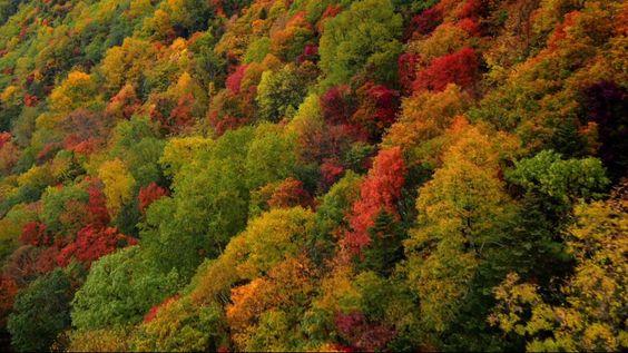 Floresta de Hokaido