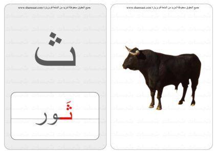 حرف كلمة صورة بطاقات الحروف والحيوانات 4
