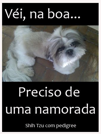 Meu filhote cresceu e busca namorada. Alguma shih tzu animada?! thatacosta@ibest.com.br