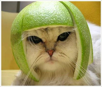 This reminds me of the watermelon helmets Lacy and I made