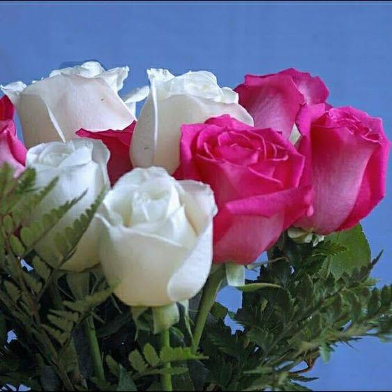 Amores e Flores e Amizade – Rosas, Flores e Animais – Közösség – Google+