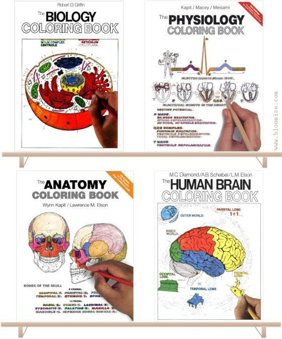 Anatomy And Physiology Coloring Books Anatomy And Physiology Colouring Book Etc A Bloomize Coloring Books Anatomy Coloring Book Physiology