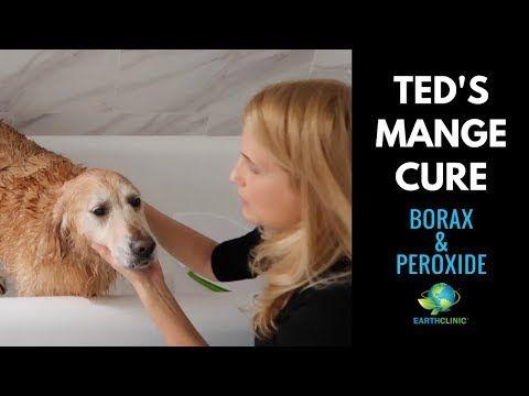 fce52962048703b737af4321bc1c7aac - How To Get Rid Of Mange In Dogs At Home