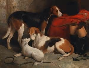 Foxhounds - - Yahoo Image Search Results