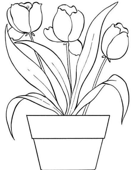 Gambar Sketsa Flora Bunga 39 Gambar Sketsa Bunga Indah Sakura Mawar Melati Matahari Download Gambar Sketsa Flora Di 2020 Gambar Flora Dan Fauna Bunga Seni Krayon