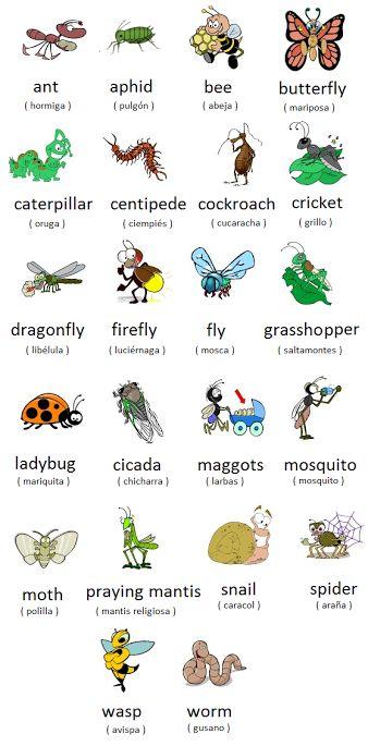 #English Vocabulary ... Bugs Dictionary: