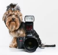 Learn Photography Canada offers affordable classes in a wide range of #photography niches.  http://learnphotographycanada.ca/home/